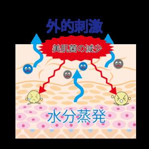 美肌菌成分に着目